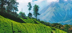 Coorg - Ooty Honeymoon Tour Package
