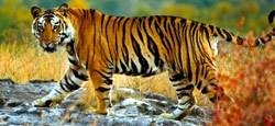 Coorg - Ooty – Bandipur National Park - Mysore Tour Package