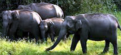 Coorg - Ooty - Kodaikanal Tour Package